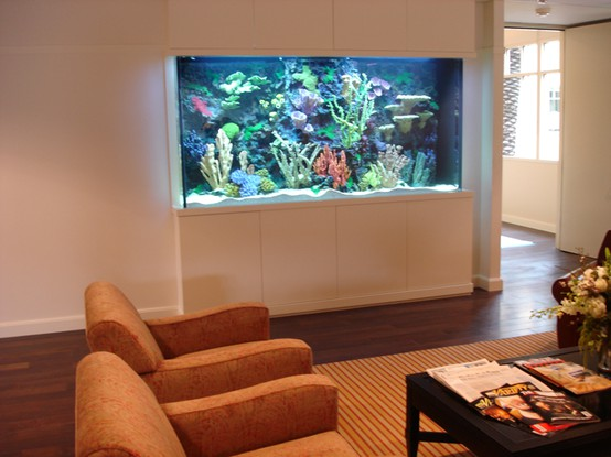 fish tanks | ReDesigning Sarah